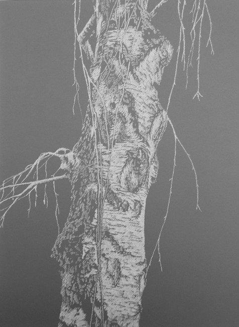 Lucija Stramec Breza VII 2017 risba na papirju 42 cm  30 cm_small